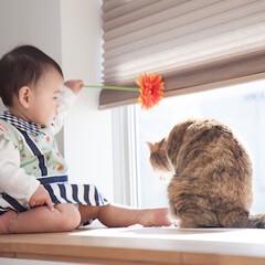 ほしい未来はネコが教えてくれた!? ネコ専用の賃貸アパ...