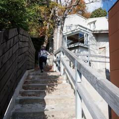 木々が生い茂る旗竿傾斜地に建つスキップフロアの家