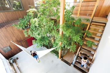家の真ん中にあるアオダモの木。人と自然が混ざり合う暮らし