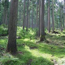株式会社木の里工房木薫のプロフィール写真