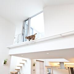 猫と一緒に暮らしたい、そんな気持ちを「家」にしました