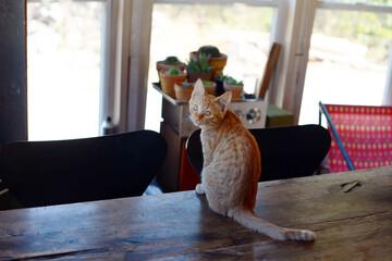 愛猫と暮らしたい!猫好き必見、オススメしたい間取りとインテリア5選