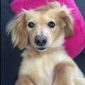ココジンピピママのプロフィール写真