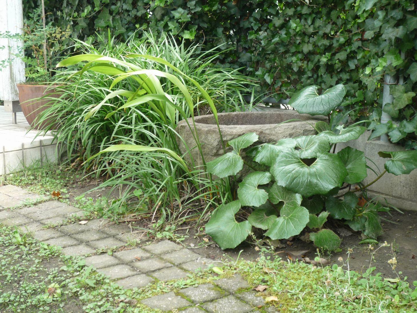 アプローチの途中の古い石臼です。石臼に水を張っておくと、夏は野鳥が水浴びをすることがあります。石臼の周りにはツワブキ、ヤブランなどの下草を植えると、より自然な感じがすると思います   「潤い感のある緑」の成功例