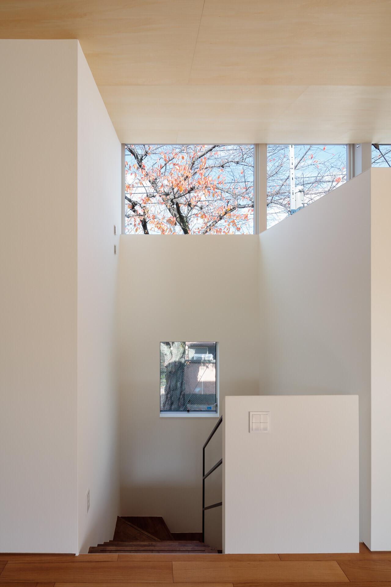 photo by大沢誠一 | 桜並木と暮らす家